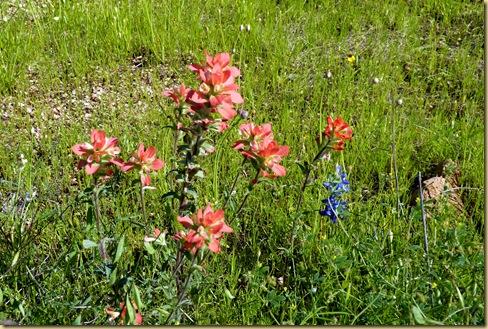 2010-04-24 - TX, Fredericksburg - Bluebonnets & Spring Flowers - 1009